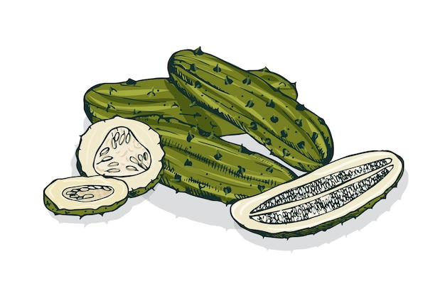 Elegante gedetailleerde tekening van hele en gesneden augurken of ingelegde komkommers