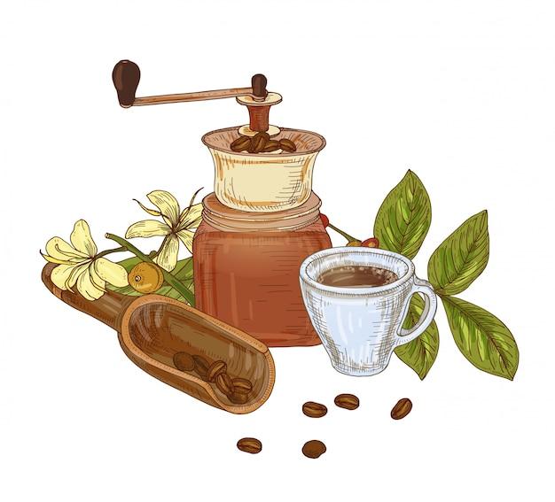 Elegante hand getrokken compositie met grinder, bonen, lepel, tak van koffieplant met bladeren, bloemen en bessen, kopje espresso. aromatische ochtenddrank. kleurrijke realistische illustratie.
