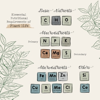 Elementaire voedingsbehoeften van het plantenleven