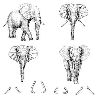 Elephant sketch icon set.ink hand getrokken illustratie. olifant tattoo art of print ontwerp.