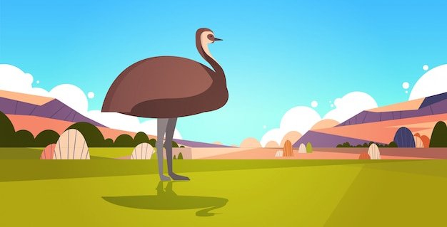 Emu wandelen op gras in australië woestijn australische wilde dieren wildlife fauna concept landschap horizontaal