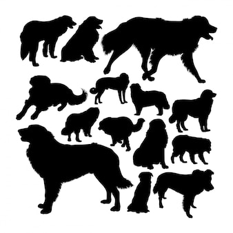 Estrela mountain dog silhouetten