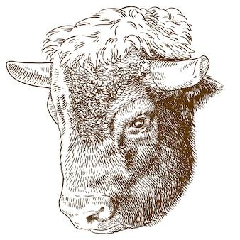 Etsen illustratie van bizon hoofd