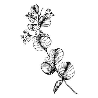 Eucalyptus bladeren. floral botanische bloem. geïsoleerd illustratie-element. hand tekenen wilde bloemen