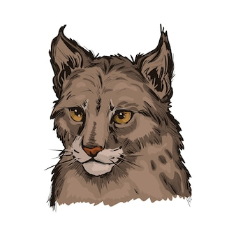 Euraziatische lynxbaby, portret van exotische dieren geïsoleerde schets. hand getekende illustratie.