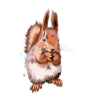 Euraziatische rode eekhoorn uit een scheutje aquarel, gekleurde tekening, realistisch.