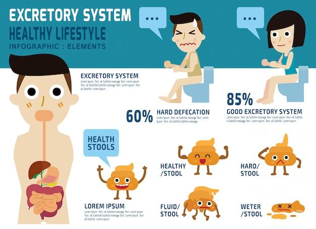 Excretie systeem gezondheidszorg concept.