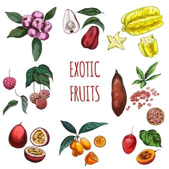 Exotisch fruit, vectorhand getrokken illustratieinzameling.