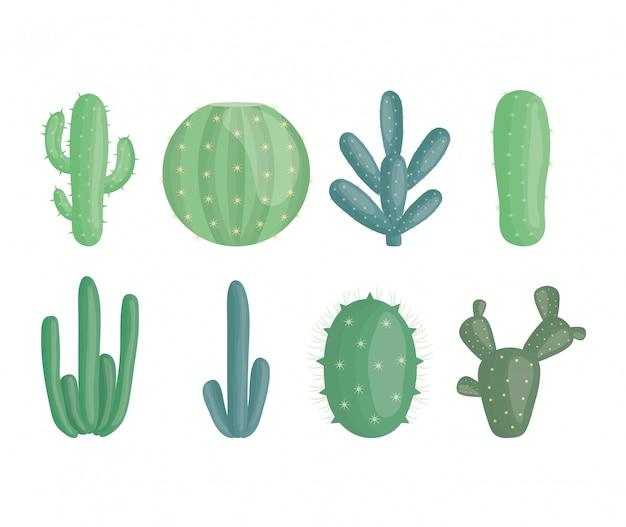 Exotische cactusplanten in keramische potten