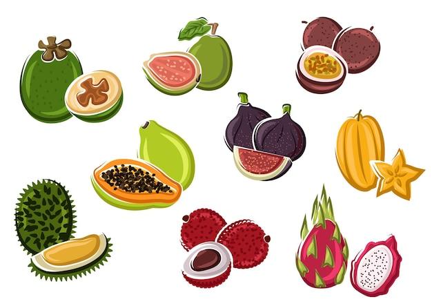 Exotische tropische verse papaja en passievrucht, vijgen en lychee, pitaya en feijoa, starfruit, guave en durian fruit in cartoonstijl. dessertrecept, natuurlijk voedsel of gebruik van tropisch cocktailontwerp