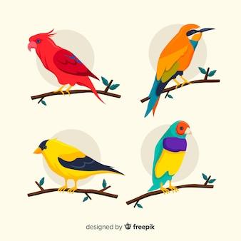 Exotische vogel collectie plat ontwerp