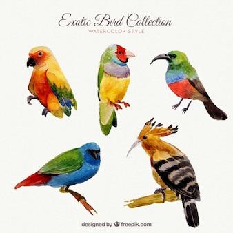 Exotische vogels collectie in aquarel stijl