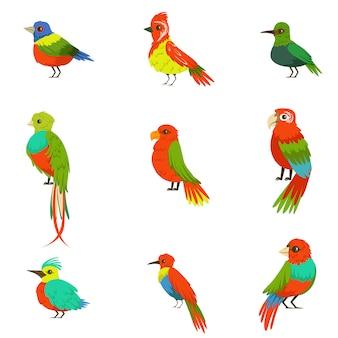 Exotische vogels uit jungle regenwoud set van kleurrijke dieren, waaronder soorten paradijsvogels en papegaaien