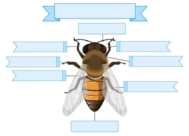 Externe anatomie van een bijen werkblad