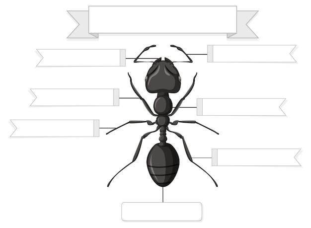Externe anatomie van een mier werkblad