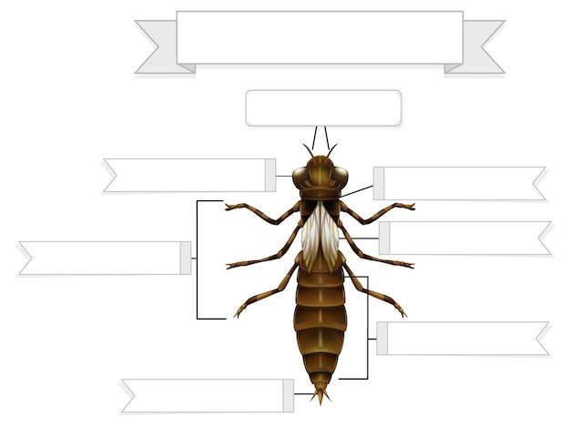 Externe anatomie van een nimf van een libel werkblad