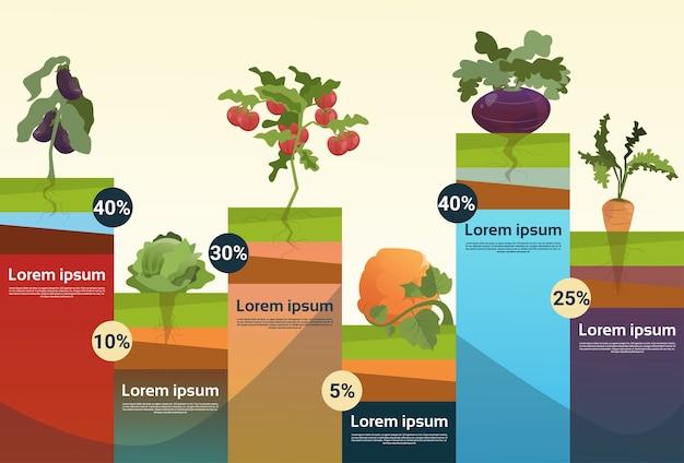 Farm organic eco vegetables kruidenier infographic