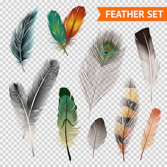 Feathers realistische set