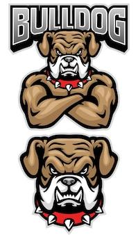 Felle bulldog mascotte gekruiste arm pose