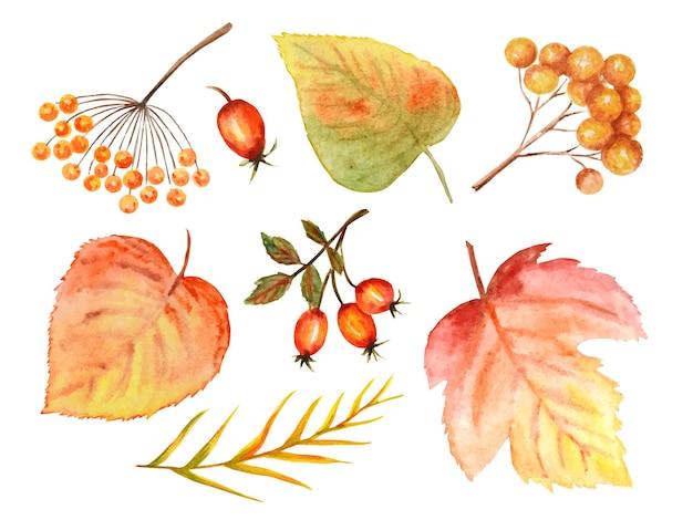 Felle kleuren set herfstbladeren. wilde druiven, iep, linde, kastanjeboom, lijsterbes, peer. aquarel herfstblad hand getrokken illustratie.