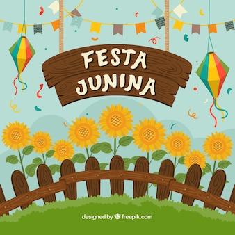 Festa junina achtergrond met prachtige zonnebloemen