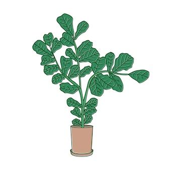 Fiddle-leaf vijg of ficus lyrata groeit in pot. decoratieve kamerplant met groene bladeren in plantenbak. mooie potplant geïsoleerd op een witte achtergrond. huis & tuin. kleurrijke vectorillustratie