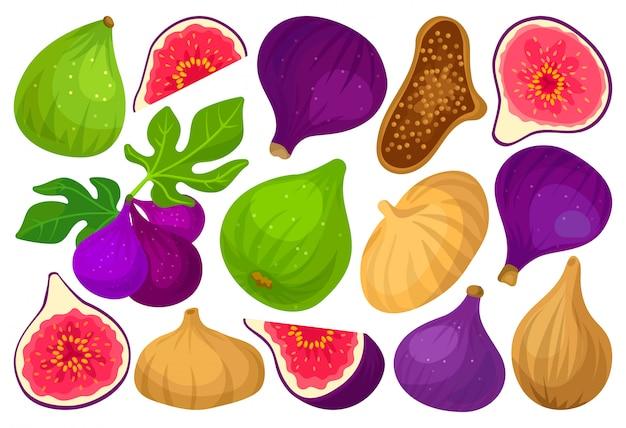 Fig cartoon ingesteld pictogram. illustratie fruit op witte achtergrond. cartoon instellen pictogram fig.
