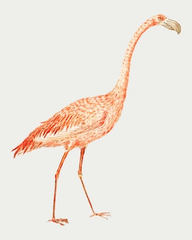 Flamingo in vintage stijl