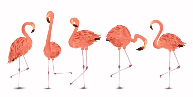 Flamingo roze set