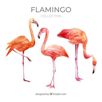 Flamingo's collectie met verschillende houdingen in aquarel stijl