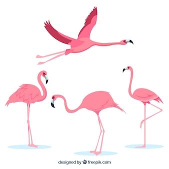 Flamingo's collectie met verschillende houdingen in vlakke stijl