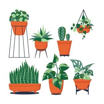 Flat kamerplant collectie