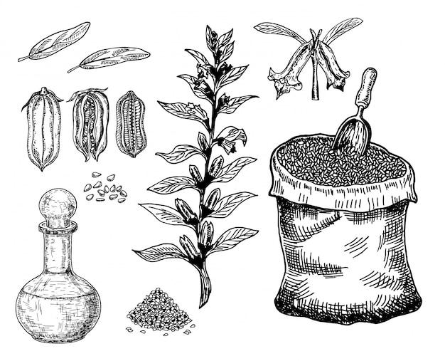 Fles sesamolie met plant en zaad. zak met sesamzaadjes. hand getekende illustratie. op een witte achtergrond.