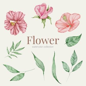 Floral element aquarel collectie