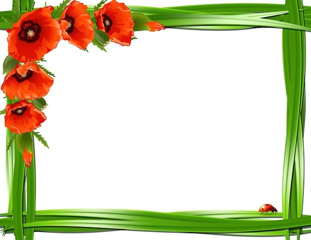 Floral frame met rode papavers en lieveheersbeestjes. vector achtergrond