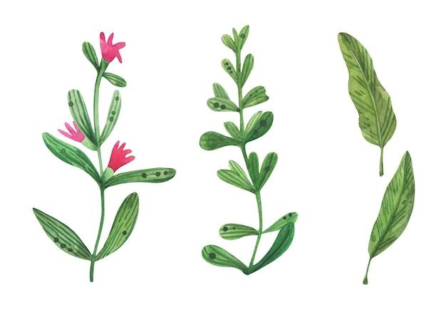 Floral set hand getekend in aquarel met tijm, rozemarijn, kruiden, bloemen.
