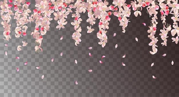 Florale achtergrond met kersenbloesem. roze hangende bloemen en vallende bloemblaadjes