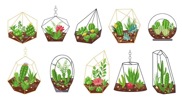 Florarium planten. tropische cactussen, bloemen en vetplanten in geometrische glazen terraria. botanisch interieur. mini tuinen vector set. florarium succulente cactus, plant zomer botanische illustraton
