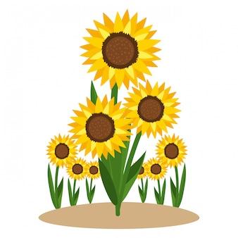 Foral zonnebloem natuur cartoon
