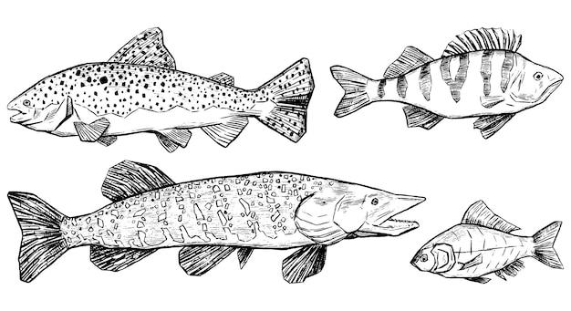 Forel, baars, snoek, crucian collectie geïsoleerd op wit. realistische inktschetsen van riviervissen. set hand getrokken vectorillustratie. schets vintage grafische elementen voor design.