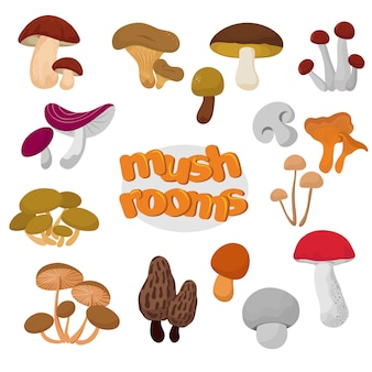 Forest zomer en herfst cartoon eetbare paddestoelen vector set