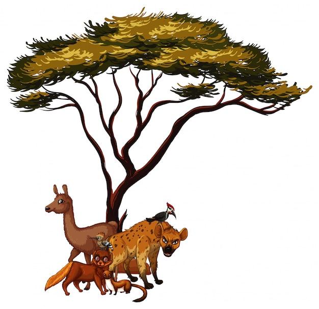 Foto van dieren onder de boom