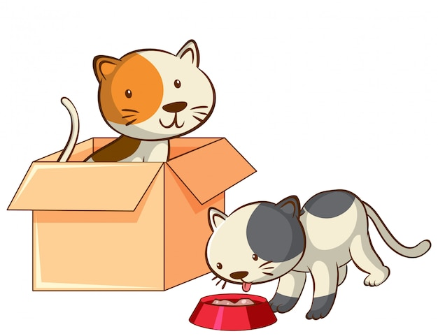 Foto van twee katten in de doos
