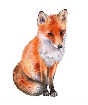 Fox geïsoleerd. waterverf