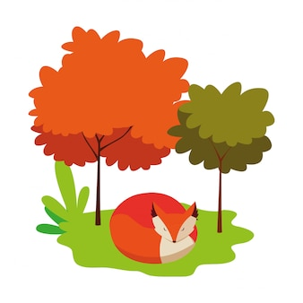 Fox zoogdier dier