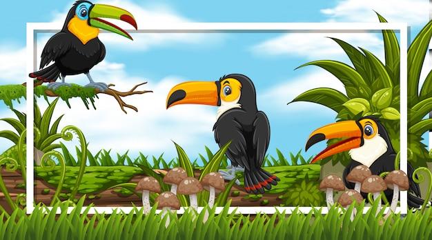 Frame-ontwerp met schattige toekanvogels in het bos