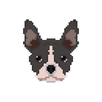 Franse bulldog-kop in pixelkunststijl