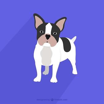 Franse bulldog tekening