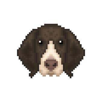Franse staande hond