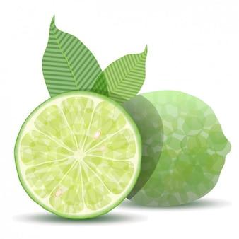 Fresh lime 3d